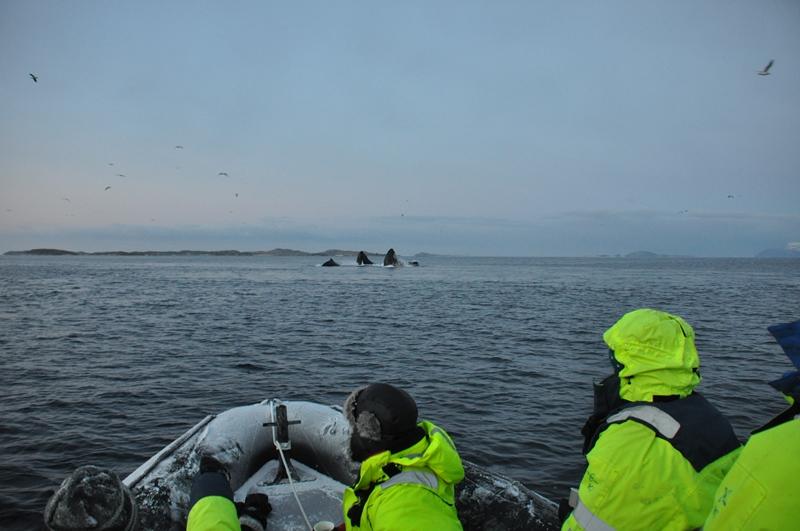 Spisende hvaler