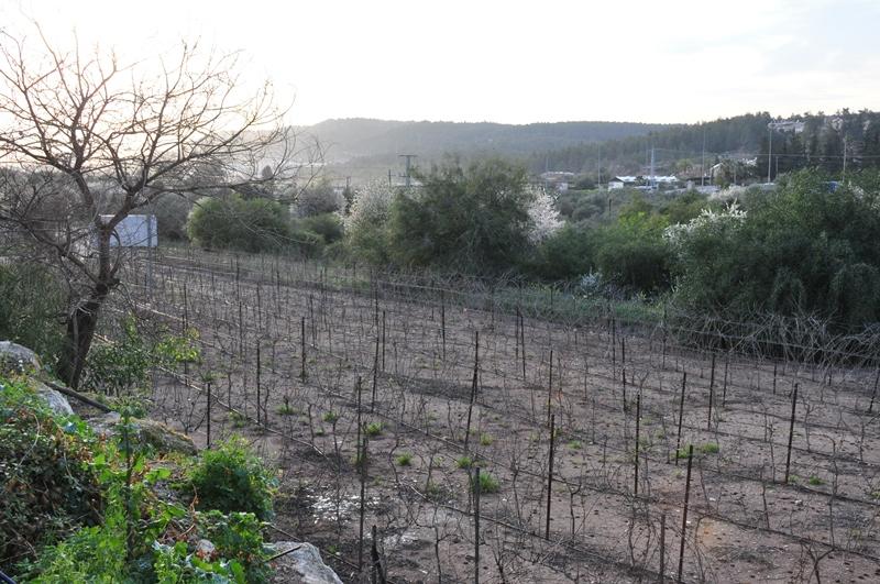 Vinmark foran Flam Winery