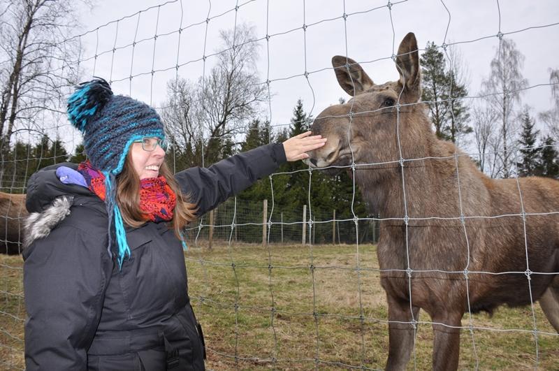Anne Marie klapper en elg