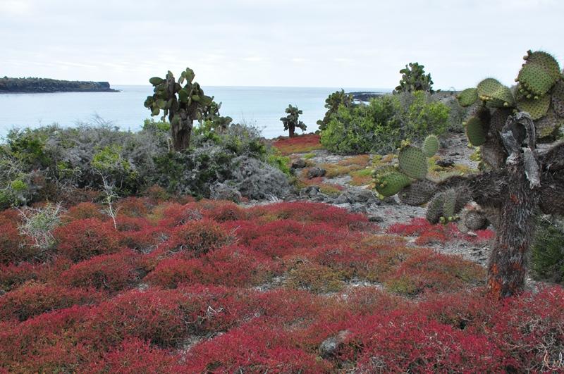 Landskab på Galapagos