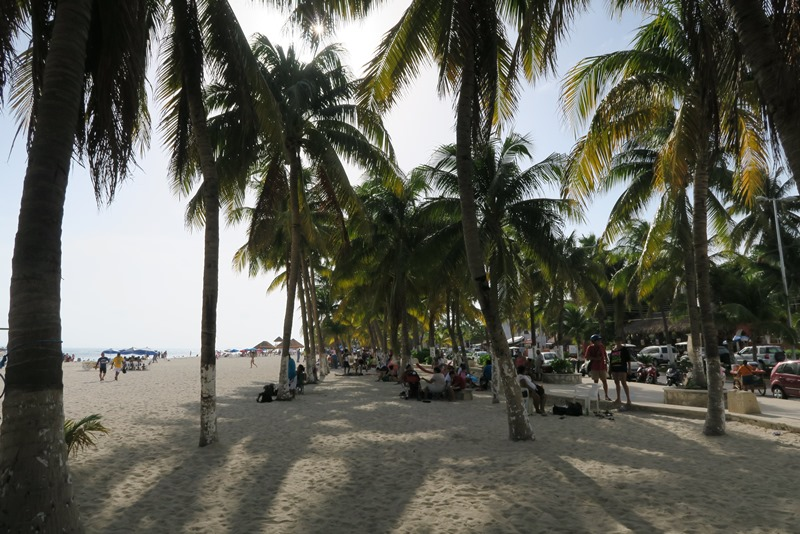 I palmernes skygge