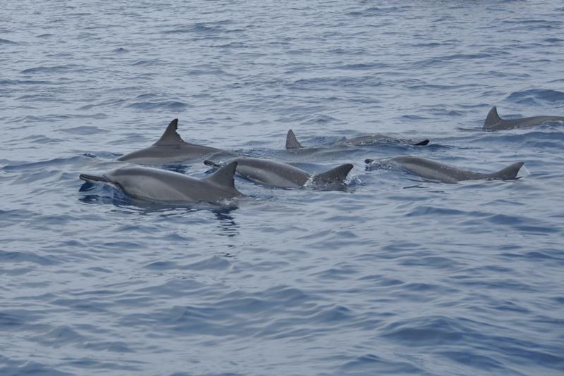 Snorkeltur med delfiner på Mauritius