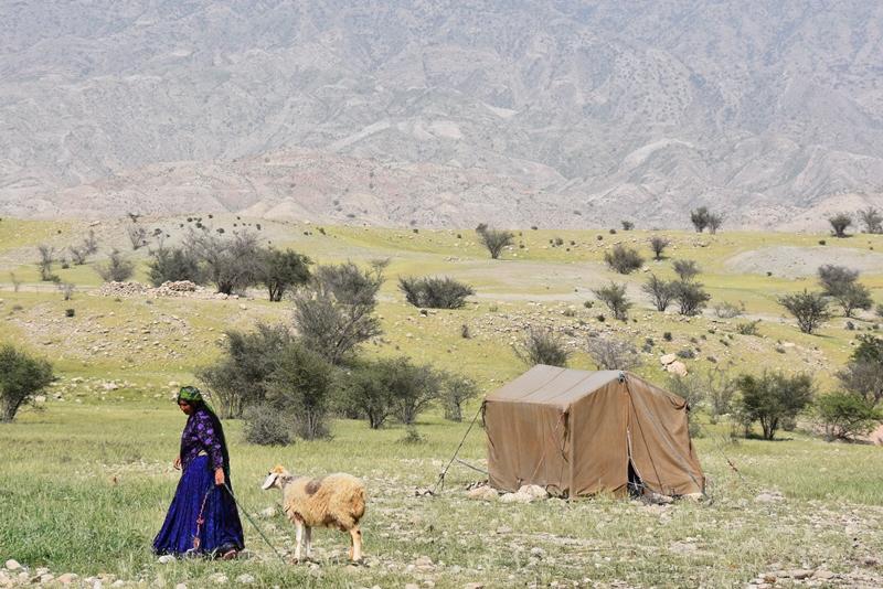 Bedstemor med et får