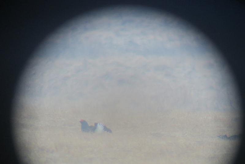 Urfugl set igennem teleskopkikkert