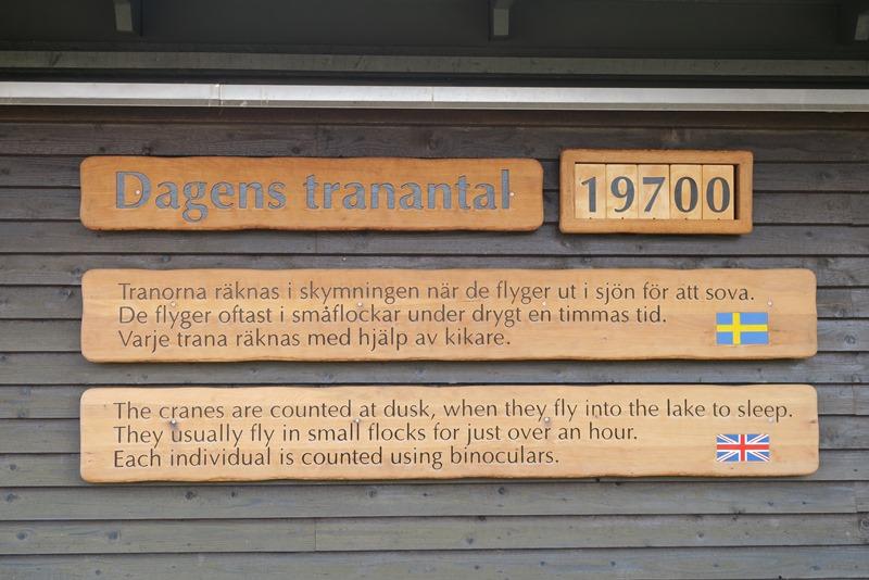Dagens tranetal ved Hornborgasjön
