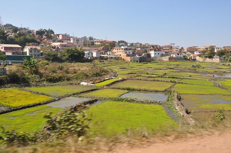 Rismarker i udkanten af Tana, Madagaskar