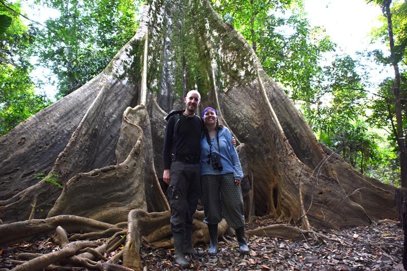 En af Amazonas største træsorter