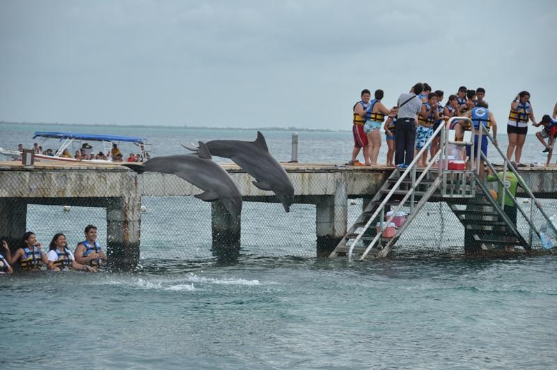 Flotte spring med delfiner