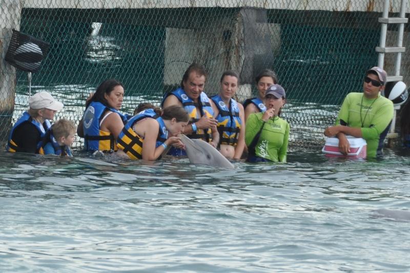 Delfinkys