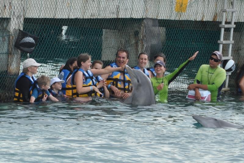 Delfiner laver tricks