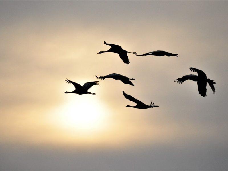Flotte traner i solnedgangen