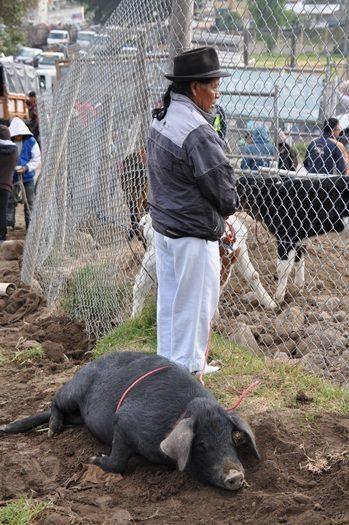 Otavalo marked