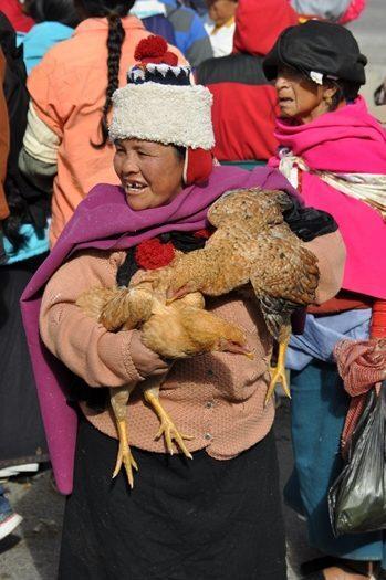 Kvinde med høne på Otavalo marked