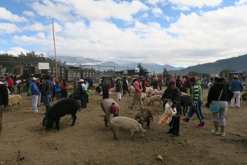 Otavalo marked4