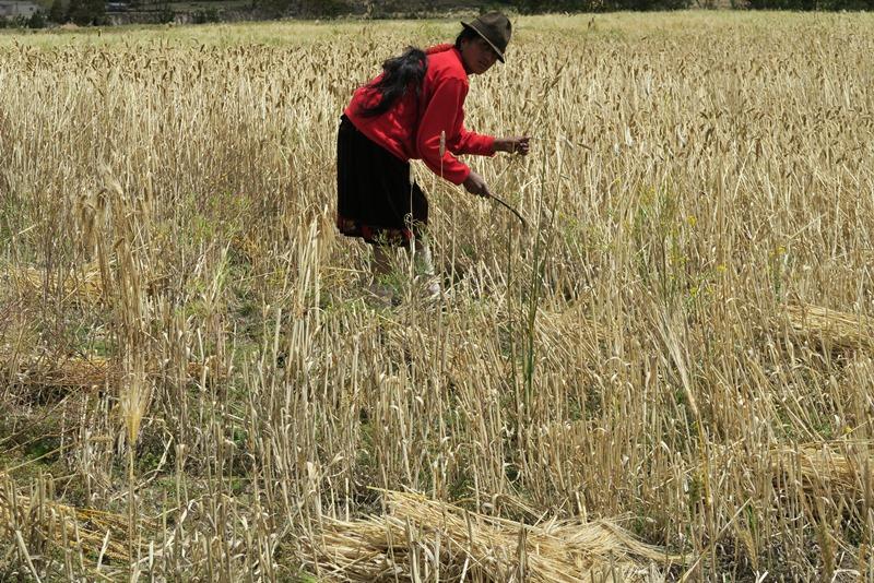 Kvinde arbejder med håndkraft i marken
