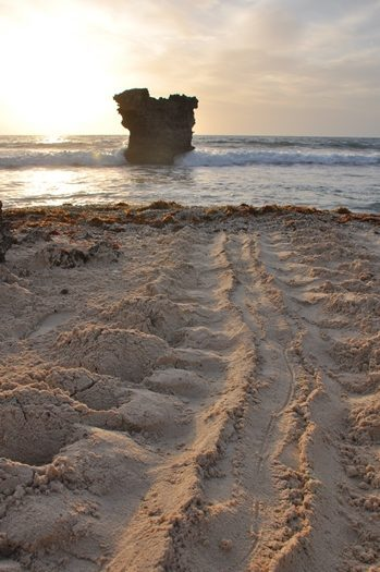 Skildpaddespor i sandet