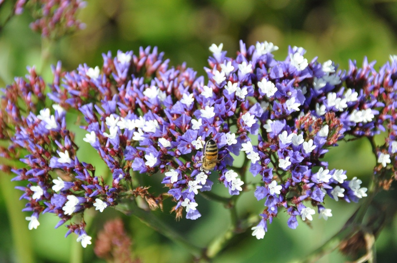 Blomster og en bi