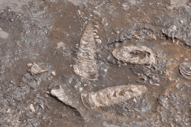 fossiler på klipper