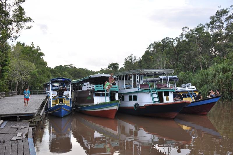 Flodbåde til orangutantur