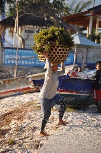 Tang er en stor industri på Nusa Penida