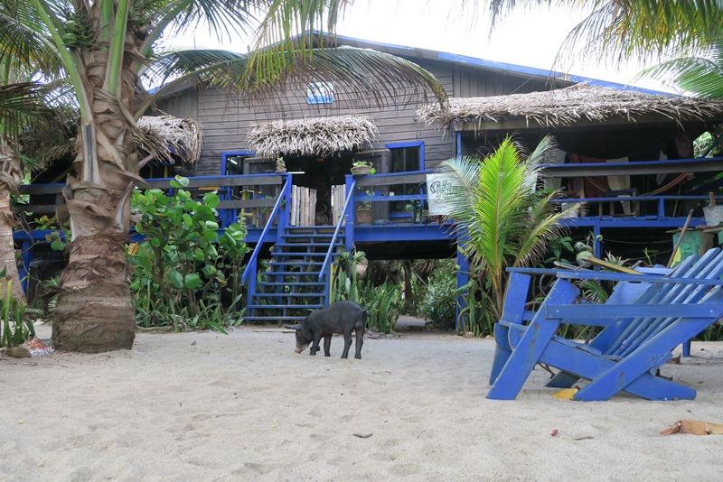 Kismet Inn og grisen Sergio
