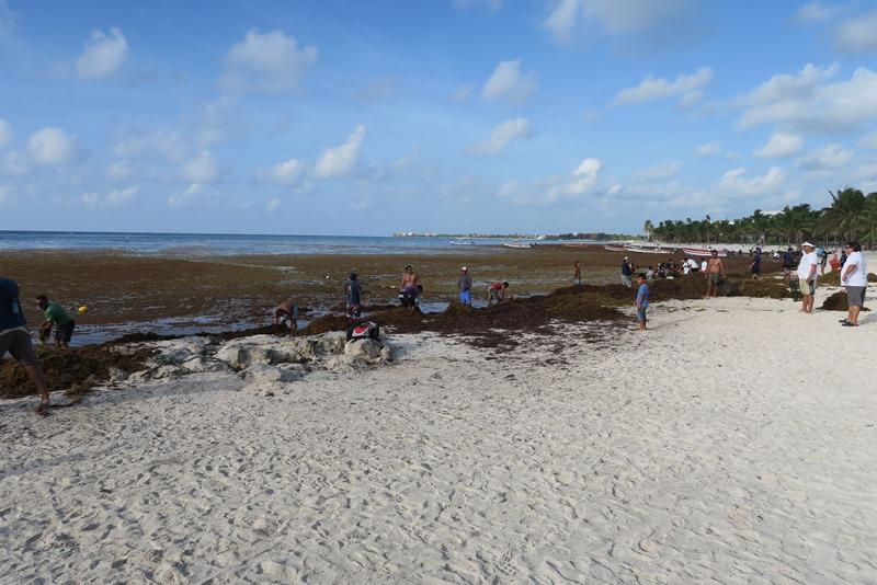 Akumal beach fyldt med tang