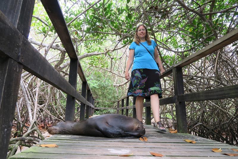 Pas på søløverne på Isabela, Galapagos