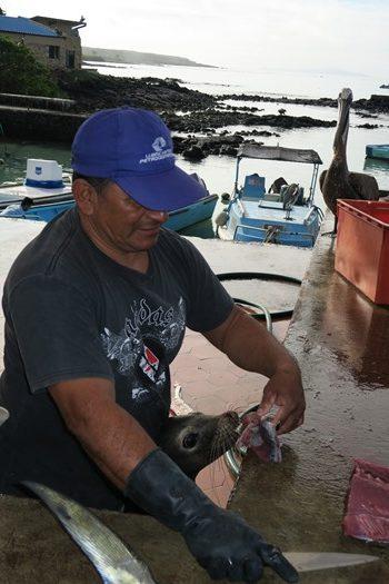 Fiskemarkedet i Puerto Ayora