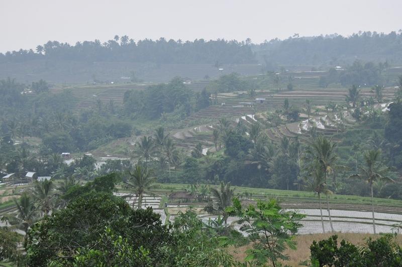 Risterrasser på Bali