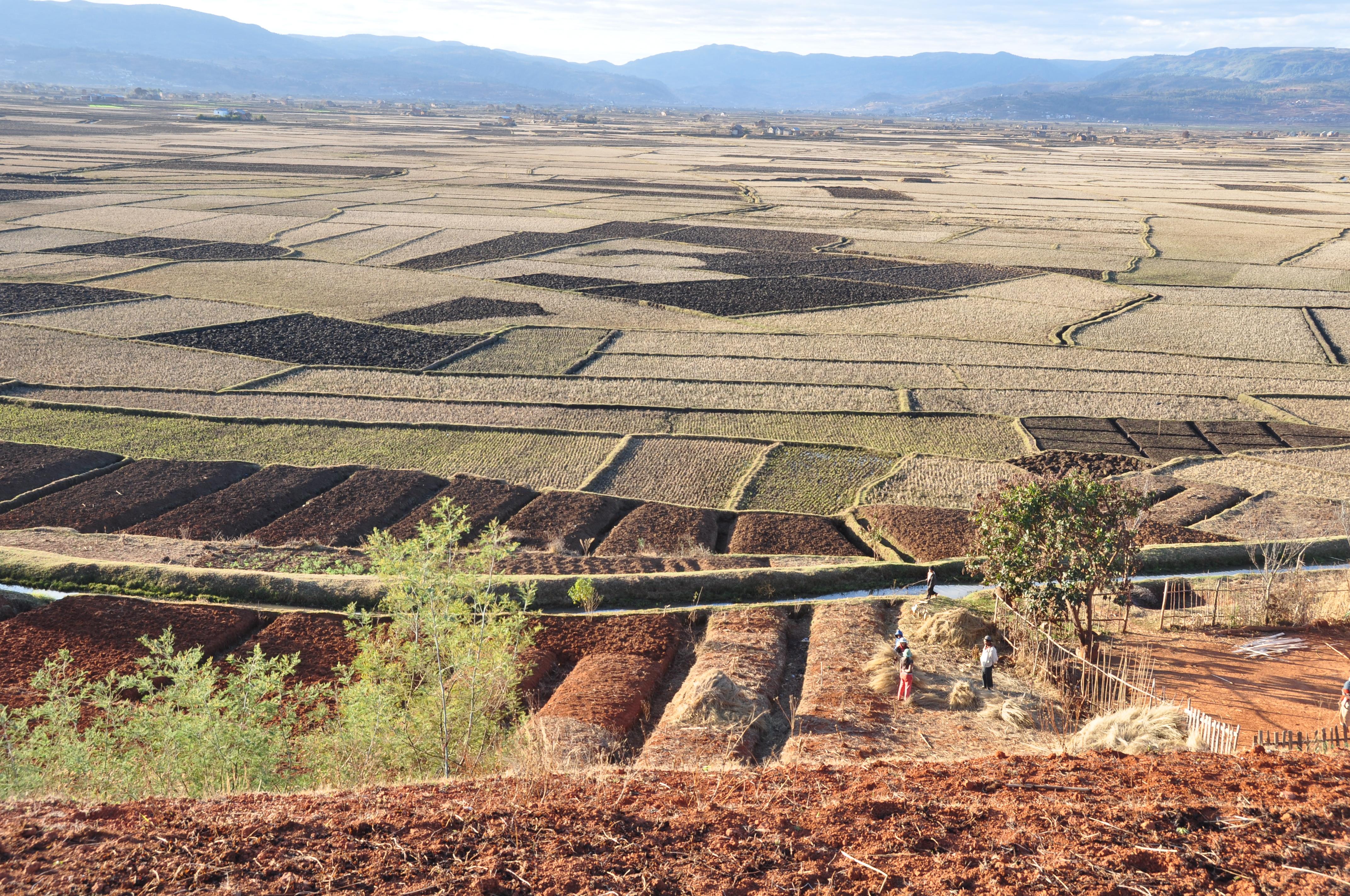 Det centrale Madagaskar bliver kaldt Madagaskars spisekammer
