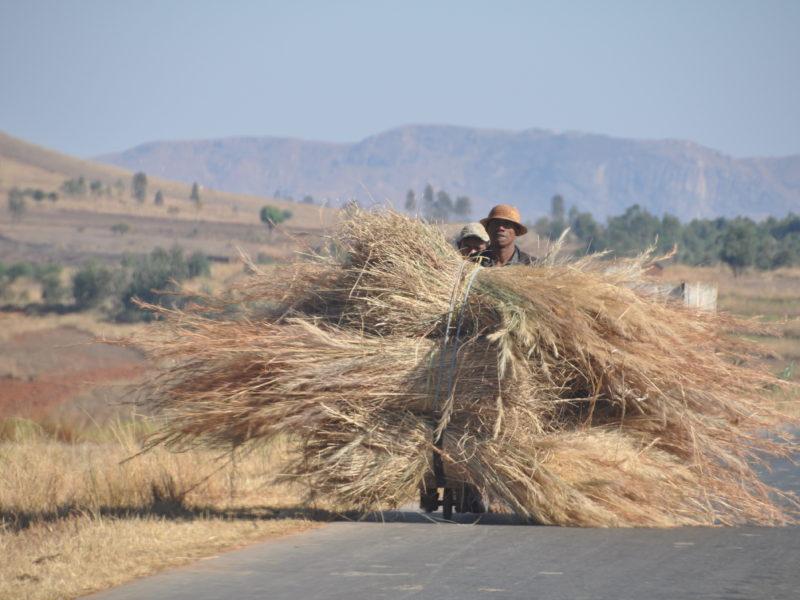 Der er læs på. Roadtrip i Madagaskar