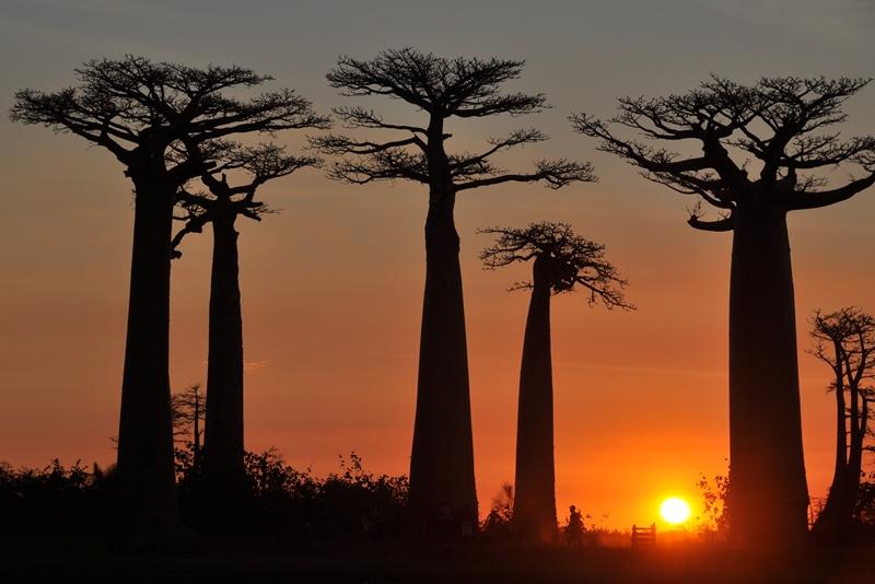 Smukt landskab i Madagaskar