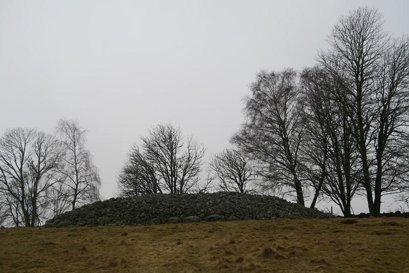 Stenrøse i Sverige