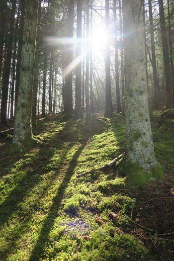 Solen skinner gennem træerne