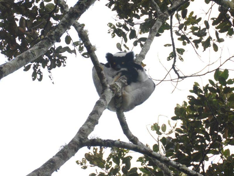 Den fine indri i et træ