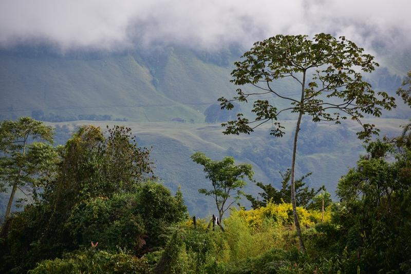Området omkring Jardín, Colombia