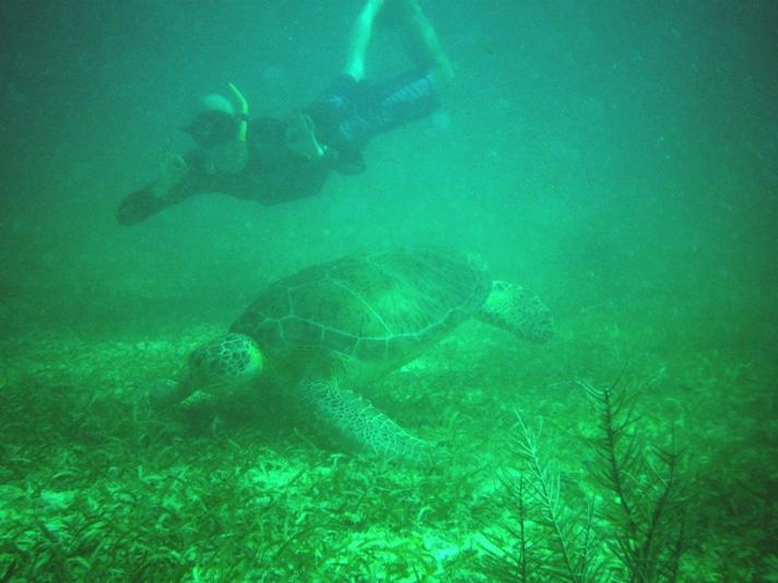 Rasmus og skildpadde ved Akumal