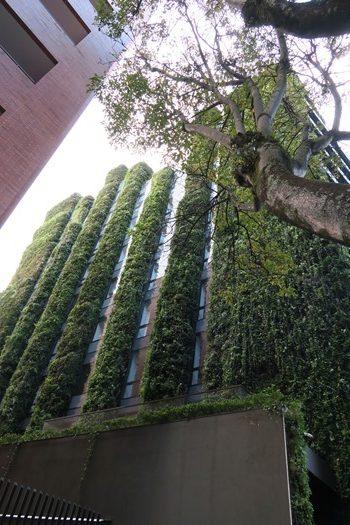 De fine hængende haver, Bogota, Colombia