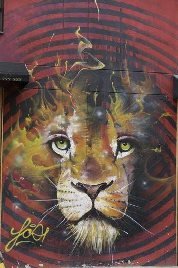 Fantastisk løve, Bogota, Colombia