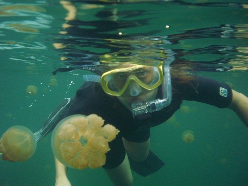Snorkling ved Jellyfish Lake, Palau