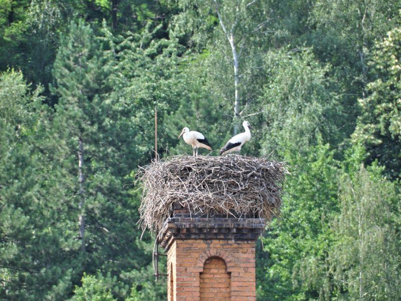 Storken er landet, Bulgarien
