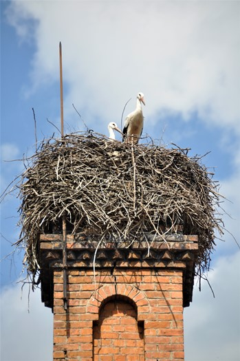 Storkerede i Bulgarien