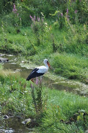 En stork har fanget en frø, Tryavna, Bulgarien