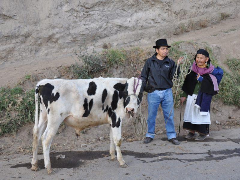 Til lørdagsmarked i Otavalo, Ecuador