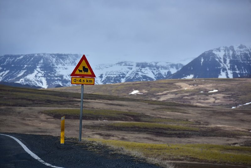 Sødt skilt med får, Den gyldne cirkel, Island