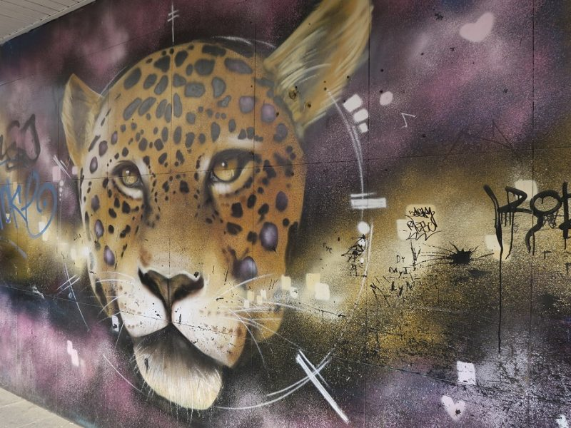 Fed street art i Guadalajara