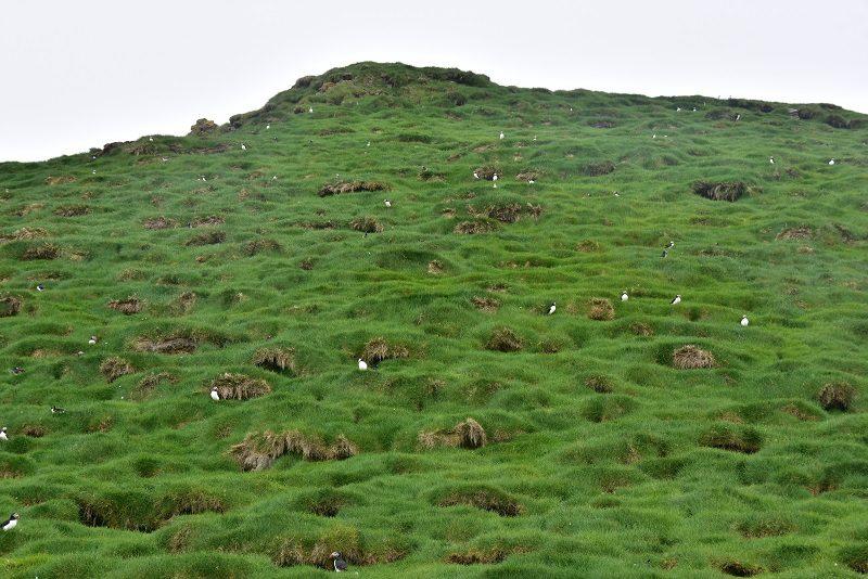 Lundeland, Mykines, Færøerne
