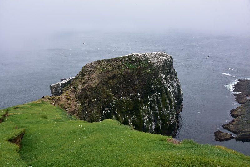 Færøernes eneste sulekoloni på øen Mykines