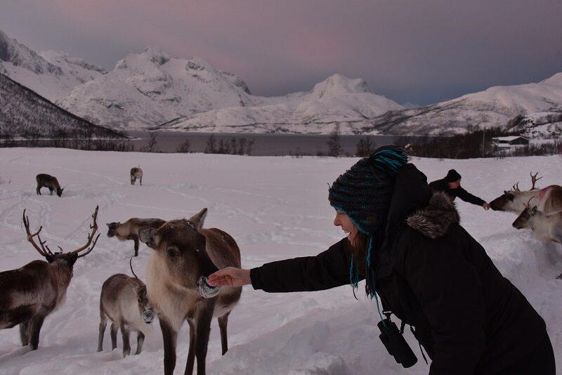 Vi hilser på rensdyr på Kvaløya.