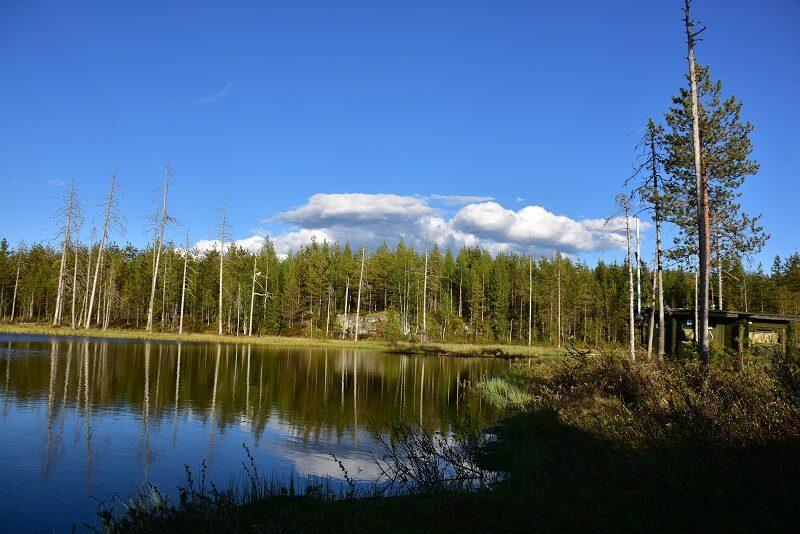 Hide ved skovsø, Finland